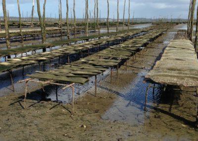 Balade en bateau bassin arcachon