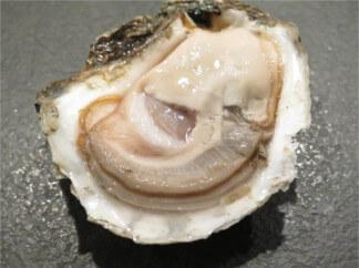 Huîtres Arès, producteur huitre arès, huitres bassin arcachon